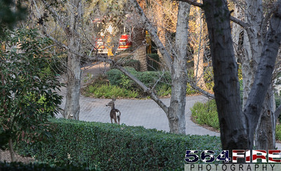 140116 LACoFD Colby Fire-23