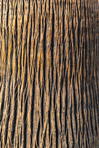 Abstract, date palm, background, los angeles, tree bark,