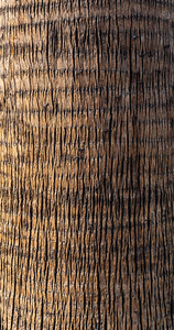 Abstract, background, bark of palm tree, date palm,