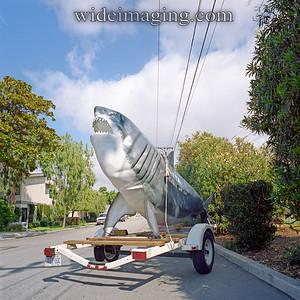 The common street shark, El Segundo October 21, 2007.