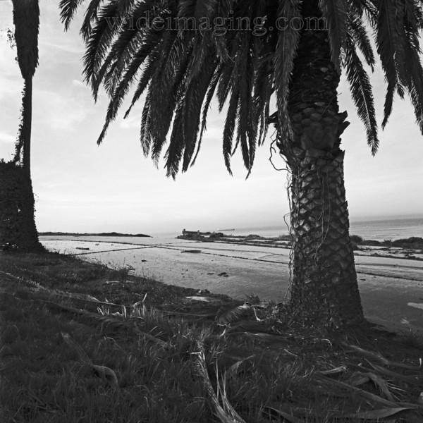 Rindge Avenue, Playa Del Rey, Ghost Town, from October 2000.