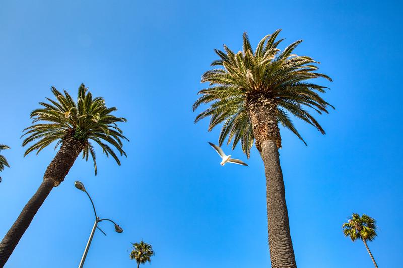 Palms and Gulls - Santa Monica