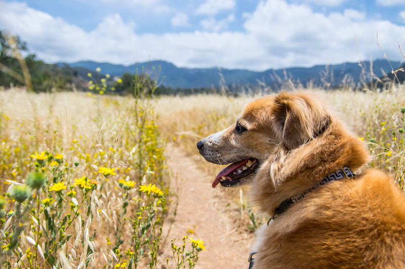 Go Hiking Paramount Ranch With Your Pup In Tow