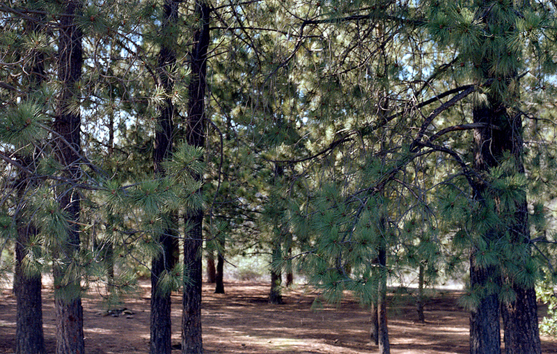 November, 1984: The Pines Camp, west view.