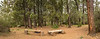 Panorama of The Pines camp, south to north from the east side, March 18, 2013