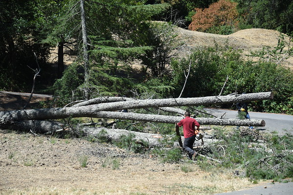 Los Primos Tree Removal 7-6-2016