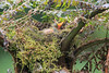 Mountain_Robin_With_Chick_Los_Quetzales0027