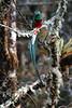 Quetzal8 (2)