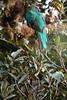 Quetzal3 (2)