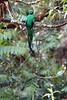Quetzal17 (2)