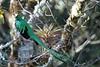 Quetzal14fm