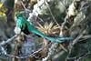 Quetzal15fm
