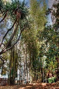 bamboo-garden-1