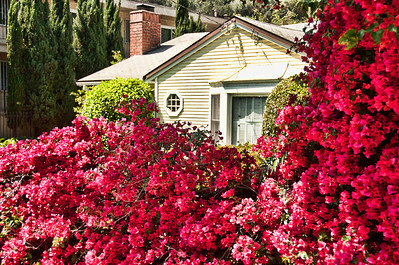 flowers-house-1