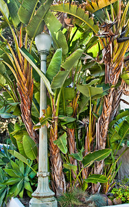banana-trees-street-lamp-1
