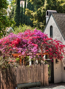 house-flowers-1