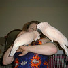 Denise Engelhardt, Charlie and Sibling brother Moses reunited after Bird Napping 1999