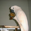Charlie snacking after bird napping  1999