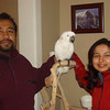 Escaped-Lost, Found- Rescued and Reunited Parrot 2009