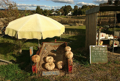 Roadside stall, Lyndhurst - local pumpkins & Pink Ladies. September 2006