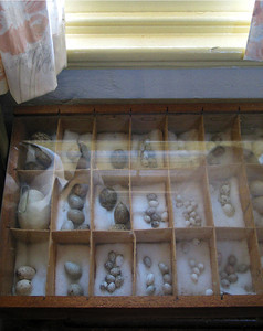 Young museum - birds' egg collection. June 2002