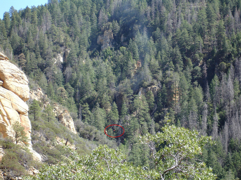 This photo was taken on the day of the accident by a group of hikers in Loy Canyon. The group spotted smoke and a small fire around mid-day at the bottom of the canyon. Having no idea of a missing plane, the fire was not given a closer look. <br /> <br /> The group did however report the fire to the United States Forest Service (USFS) Rangers. The USFS report of the fire was filed and no official agency involved in the search of N2700Q connected the fire report with the missing aircraft.