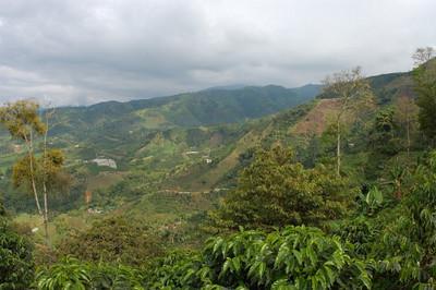 Colinas del Sol - Coffee Plantation