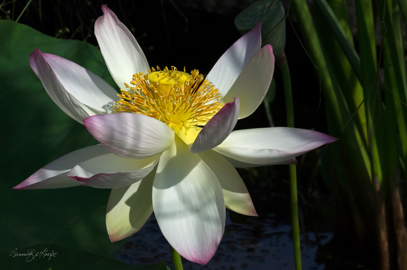 Lotus 8/18/15