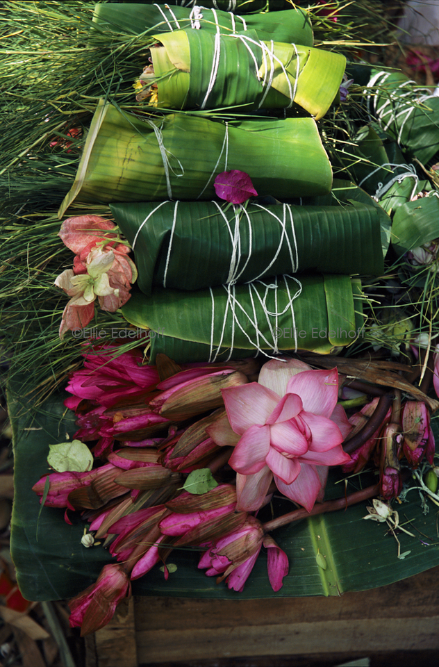 Lily Bundles – India