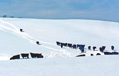 Snow Loudoun County 2006