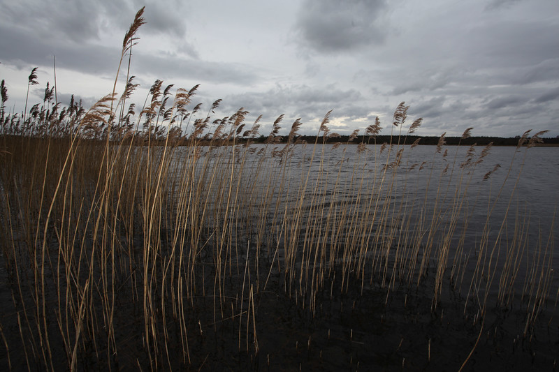 Lough Boora