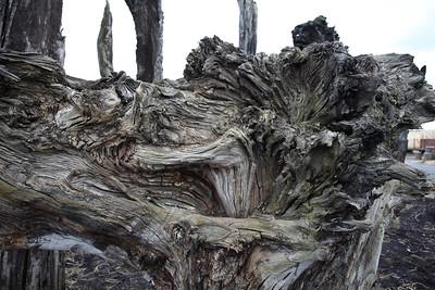Boora Bog Oak