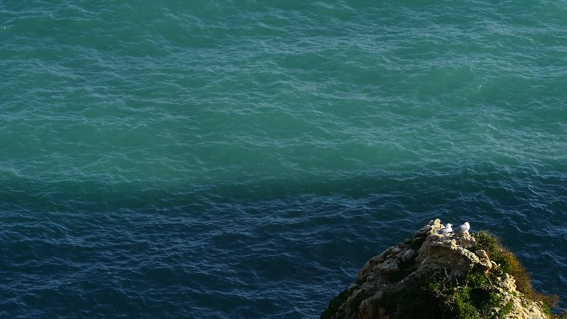 Goélands / Seagulls - Praia Marinha P1150320