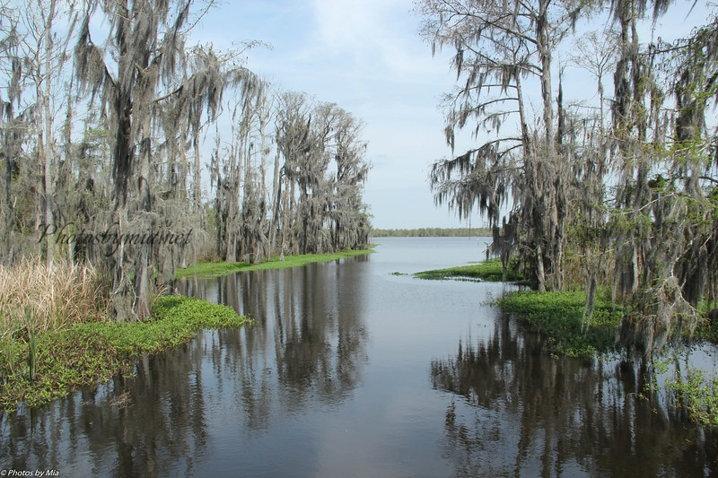 Spanish Moss over the Bayou