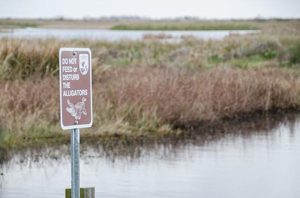 Louisiana Wildlife Spotting: Do Not Feed The Alligators!