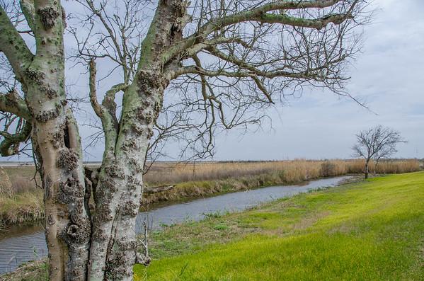 Louisiana Wildlife Spotting: Pintail Wildlife Drive