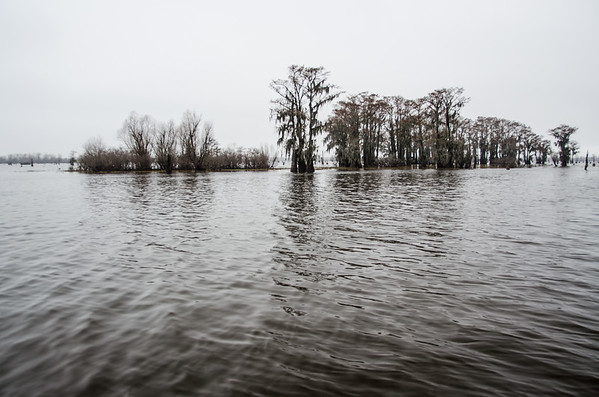 Atchafalya Basin Swamp, Louisiana
