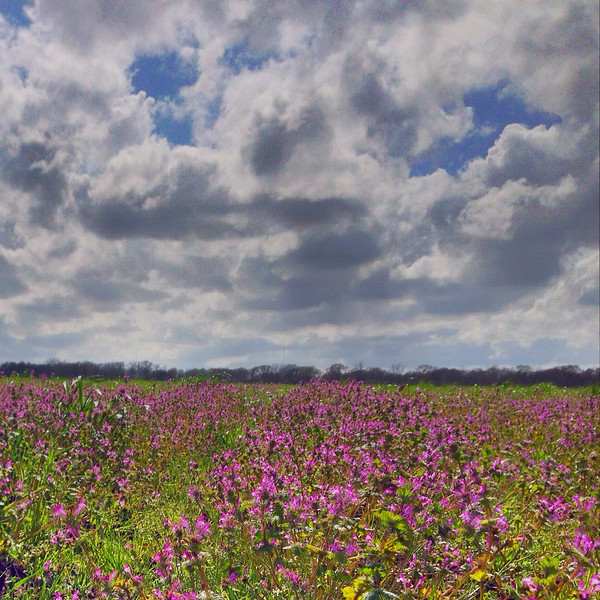 Wildflowers on the Bayou Teche near Lafayette, Louisiana