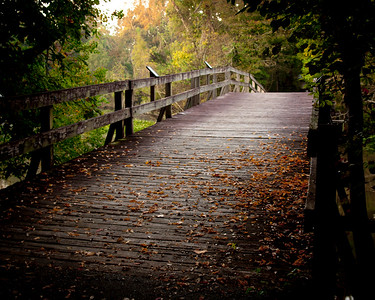 Bridge to Bird Island, Lake Fausse Point State Park, St. Martinville, LA.