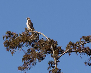 November 2011 Louisiana's Atchafalaya Basin........ Keeping an Eye on the goings-on....
