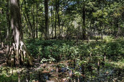 bayou-swamp-2
