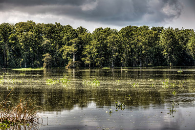 bayou-lake-trees-2-2