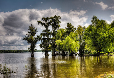 lake-bayou-trees-1