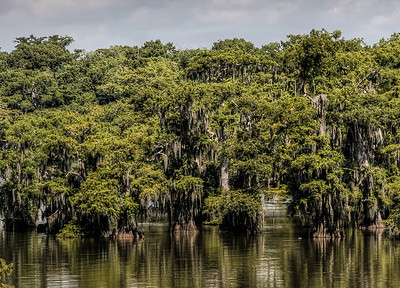 bayou-lake-cypress-trees-1