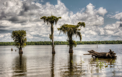 bayou-lake-trees-1