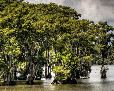 bayou-lake-trees-4-5
