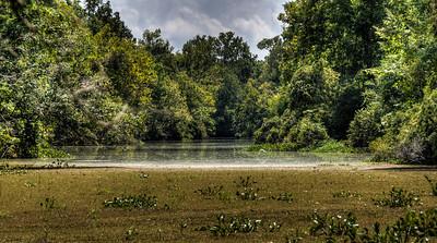 river-swamp-2-1