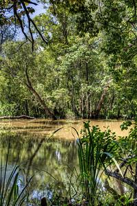 river-swamp-2