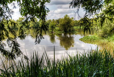 lake-swamp-2