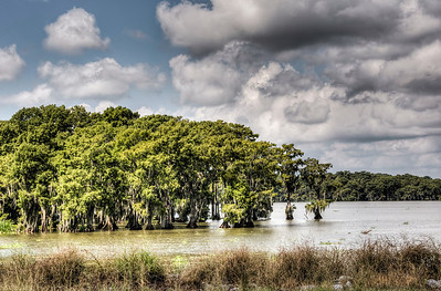 bayou-lake-trees-3-3